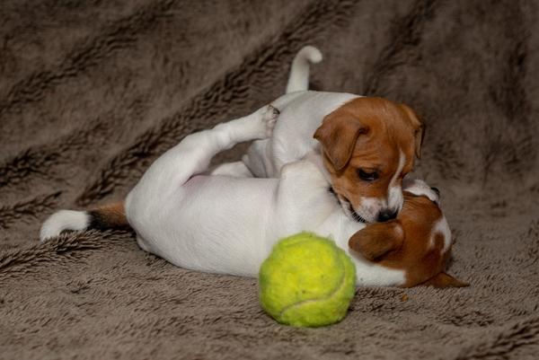 Dr Jana's Pet Hub - Puppy Preschool