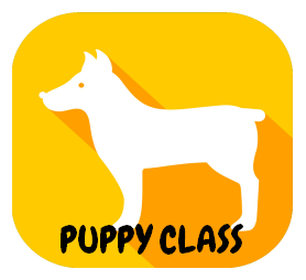 puppy class at dr janas pet hub vet clinic